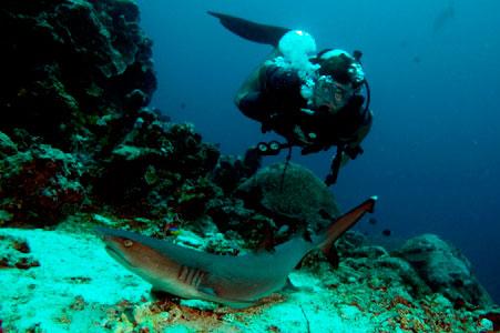 sipadan-shark-diving