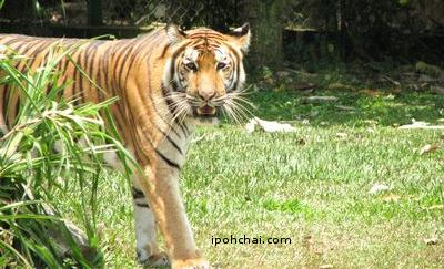 lost-world-06-tiger-valley