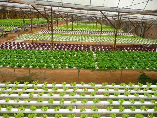 strawberry-farm
